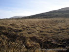 Bogland in the Mourne Mountains