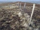 Sheep fence on rough moorland