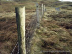 Posts and wire fence on rough moorland