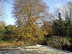 River lagan with overhanging tree in autumn colour