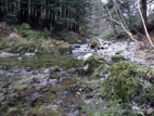 Shimna River, Tollymore