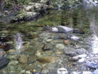 Shimna River bottom, Tollymore