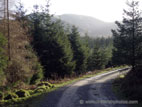 Forest road through Tollymore
