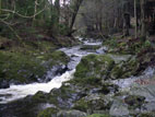 Waterfall on the Shimna River, Tollymore Forest Park