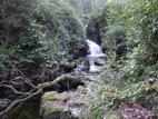 Waterfall in Tollymore Forest Park